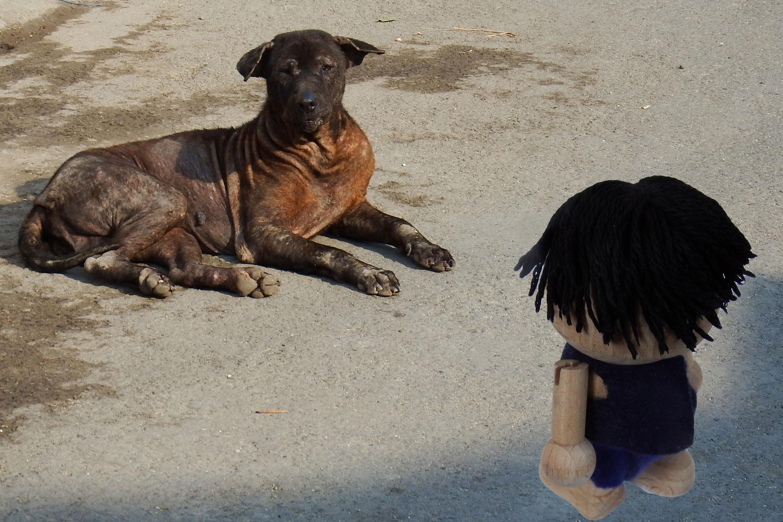 犬に飛びつかれてケガ